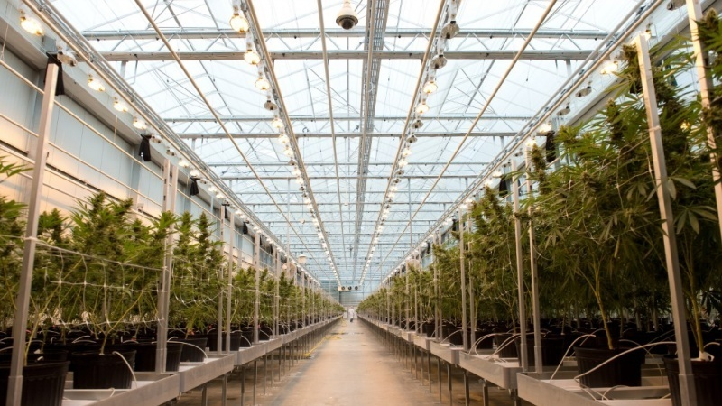 Gatineau's Hexo destroying cannabis grown in unlicensed area of Niagara facility | Ottawa Business Journal